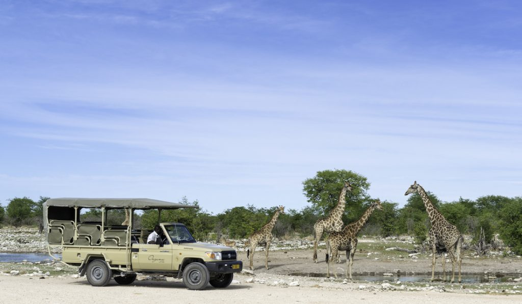 Onguma Etosha Game Drives