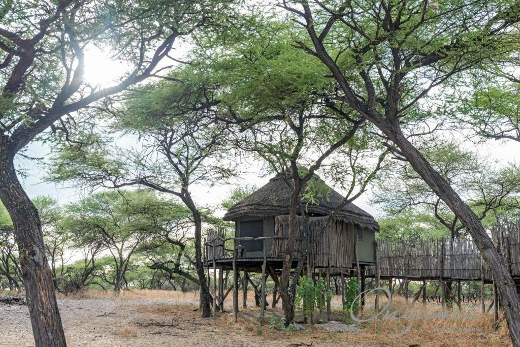 Onguma tree top camp room on stilts